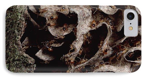 Nasute Termite Nest Amazonian Peru Phone Case by Mark Moffett