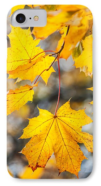 Natural Patchwork. Golden Mable Leaves Phone Case by Jenny Rainbow
