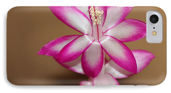 Natural Pink Christmas Cactus Phone Case by Michael Waters