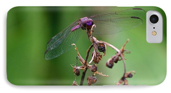 Dragonfly - Nature's Rose IPhone Case