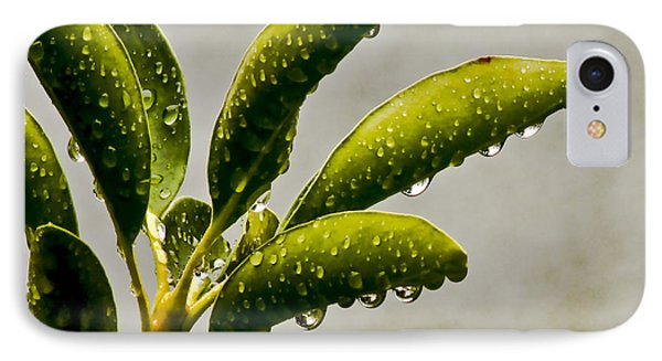 Natures Teardrops IPhone Case by Carol F Austin