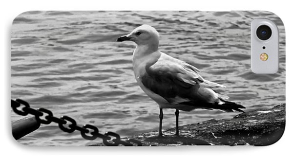 Navy Pier Seagull IPhone Case