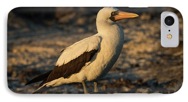 Nazca Booby (sula Granti IPhone Case