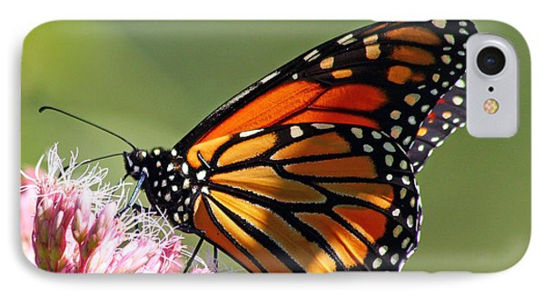 IPhone Case featuring the photograph Nectaring Monarch Butterfly by Debbie Oppermann
