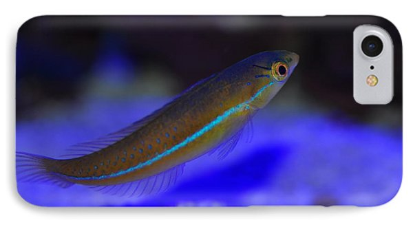 Neon Wrasse  IPhone Case by Puzzles Shum