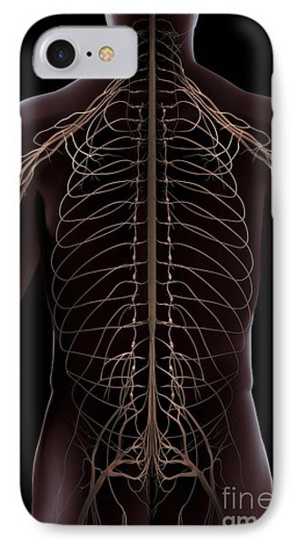 Nerves Of The Trunk IPhone Case