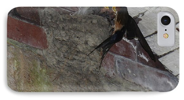 Nesting Northern Rough-wing Swallows  IPhone Case