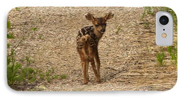IPhone Case featuring the photograph New Born Mule Deer by Daniel Hebard