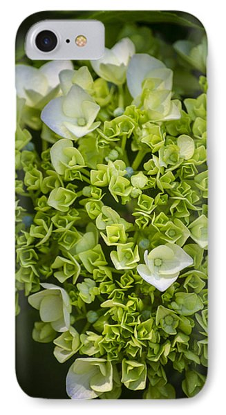 New Buds IPhone Case by Craig Perry-Ollila
