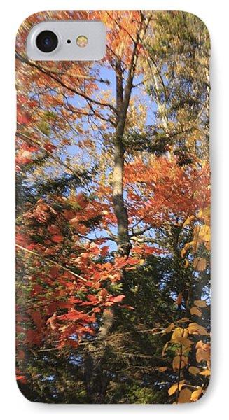 New England Trees IPhone Case