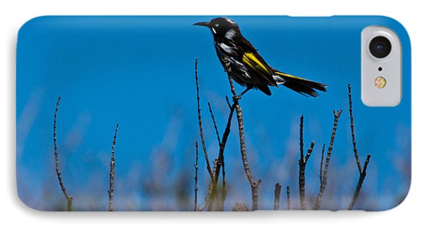 IPhone 7 Case featuring the photograph New Holland Honeyeater by Miroslava Jurcik