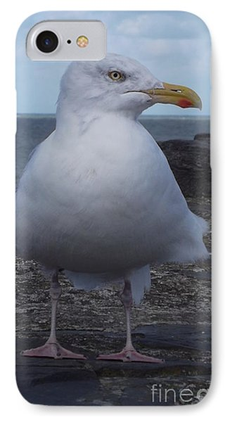 New Quay Gull  IPhone Case