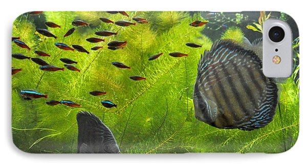New York Aquarium Fish IPhone Case by Diane Lent