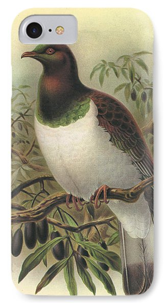 New Zealand Pigeon IPhone Case by Anton Oreshkin