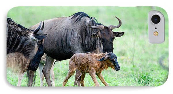Newborn Wildebeest Calf IPhone Case