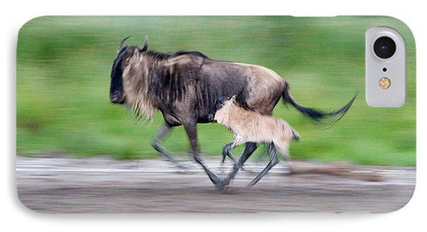 Newborn Wildebeest Calf Running IPhone Case by Panoramic Images