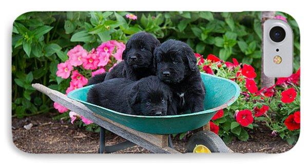 Newfoundland Puppies IPhone Case by Robert Buzzard Jr