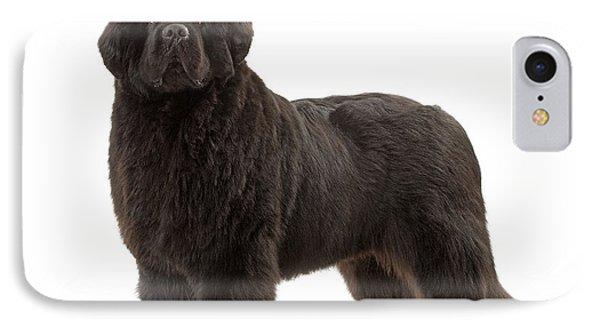Newfoundland Puppy Dog IPhone Case by Jean-Michel Labat