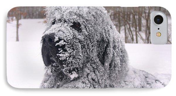Newfoundland Snow Dog IPhone Case by Edie Ann Mendenhall