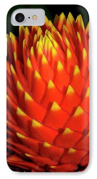 Nidularium 'fireball' IPhone Case by Nigel Downer