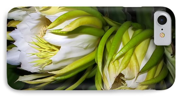 Night Blooming Cereus 31 IPhone Case by Dawn Eshelman