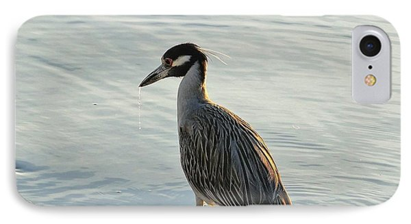 Night Heron IPhone Case by Cindy Croal