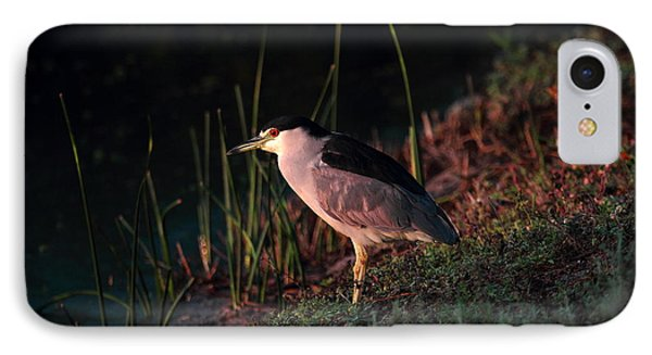 IPhone Case featuring the photograph Night Heron  by Duncan Selby