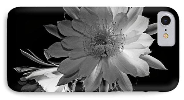 Nightblooming Cereus Cactus Flower IPhone Case by Susan Duda