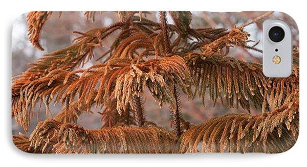 Norfolk Island Pine (a. Heterophylla) IPhone Case by Dr. Nick Kurzenko