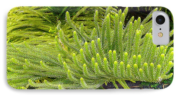 Norfolk  Island  Pine In California Phone Case by Bob and Nadine Johnston