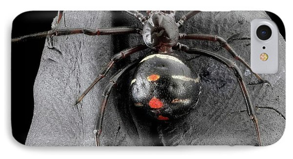 Northern Black Widow Spider IPhone Case by Us Geological Survey