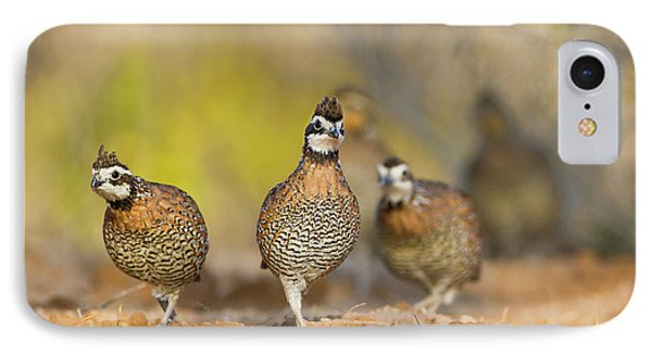 Northern Bobwhite Quail (colinus IPhone Case by Larry Ditto