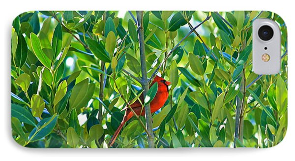 IPhone Case featuring the photograph Northern Cardinal Hiding Among Green Leaves by Cyril Maza