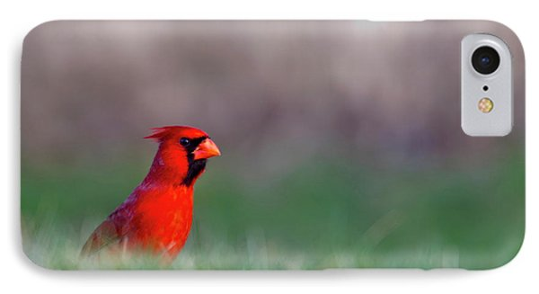Northern Cardinal In Loup County IPhone Case