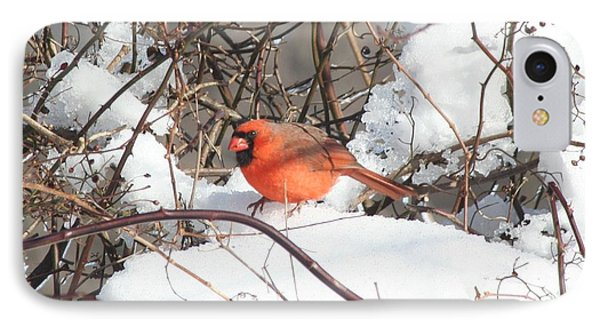 Northern Cardinal IPhone Case by Karen Silvestri