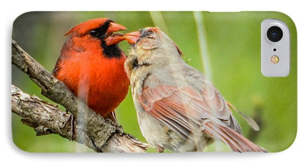 Northern Cardinal Male And Female IPhone Case
