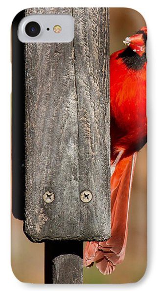 IPhone Case featuring the photograph Northern Cardinal by Robert L Jackson