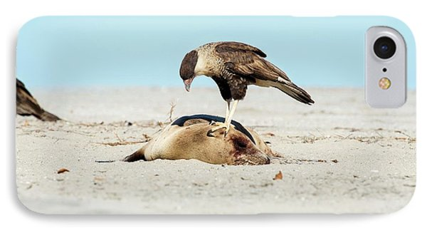 Northern Crested Caracara On A Carcass IPhone Case by Christopher Swann