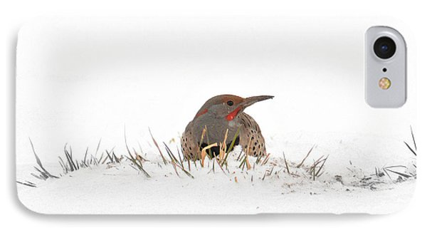 IPhone Case featuring the photograph Northern Flicker by Al  Swasey
