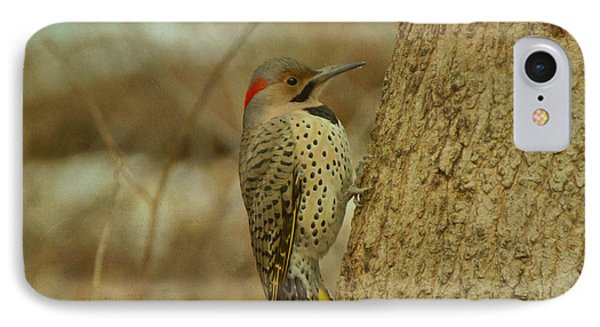 Northern Flicker On Tree IPhone Case by Sandy Keeton