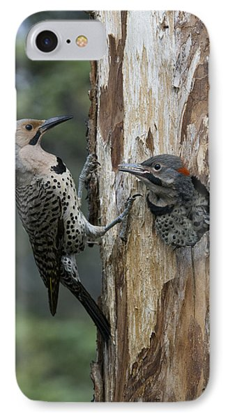 Northern Flicker Parent At Nest Cavity IPhone Case by Michael Quinton