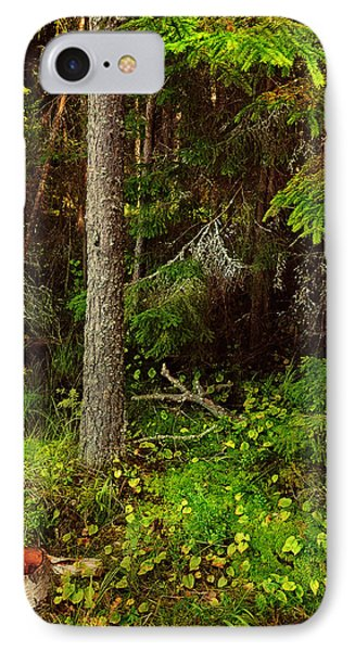 Northern Forest 1 Phone Case by Jenny Rainbow