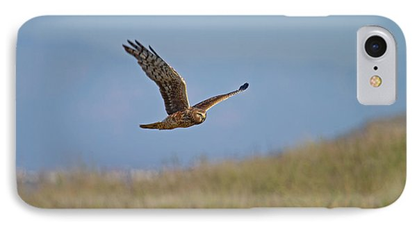 IPhone Case featuring the photograph Northern Harrier In Flight by Duncan Selby