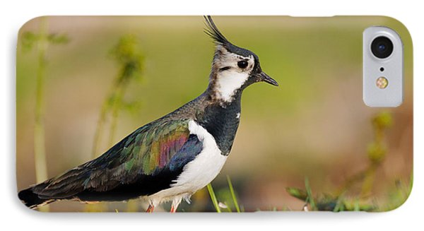 Lapwing iPhone 7 Case - Northern Lapwing by Willi Rolfes