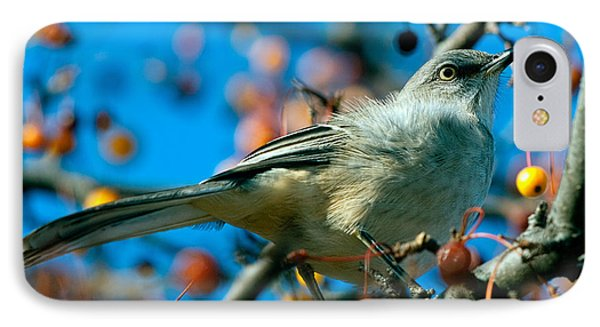 Northern Mockingbird Phone Case by Bob Orsillo