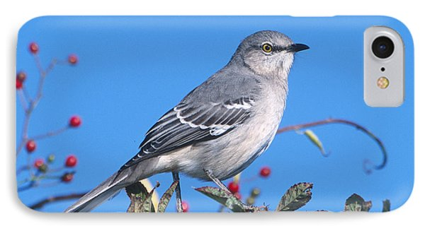 Northern Mockingbird IPhone 7 Case by Paul J. Fusco