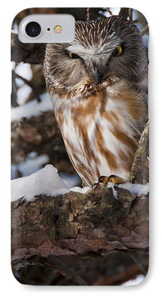 Northern Saw-whet Owl.. Phone Case by Nina Stavlund