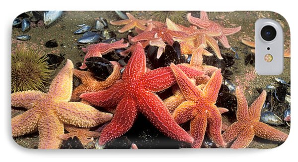 Northern Sea Stars IPhone Case