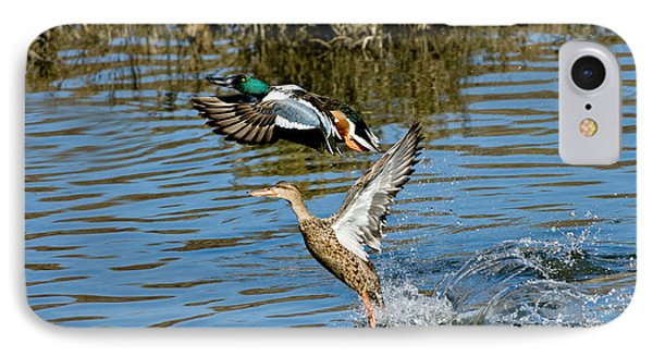 Northern Shoveler Pair IPhone Case