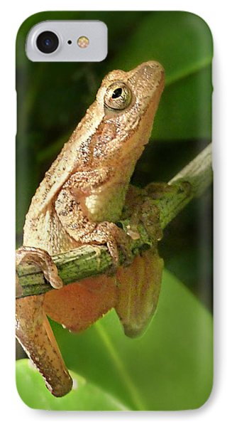 Northern Spring Peeper IPhone Case by William Tanneberger